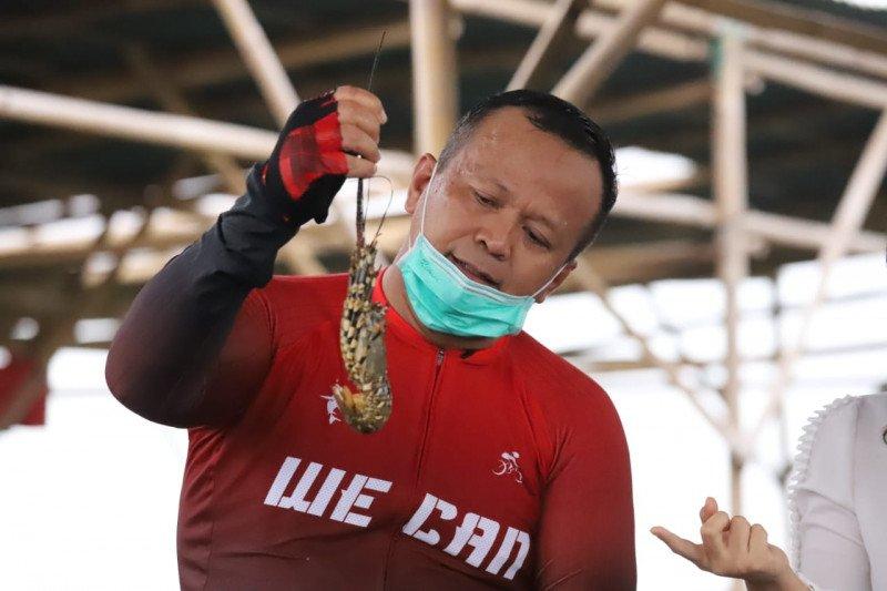 KKP dorong penguatan pengawasan tata kelola lobster berkelanjutan