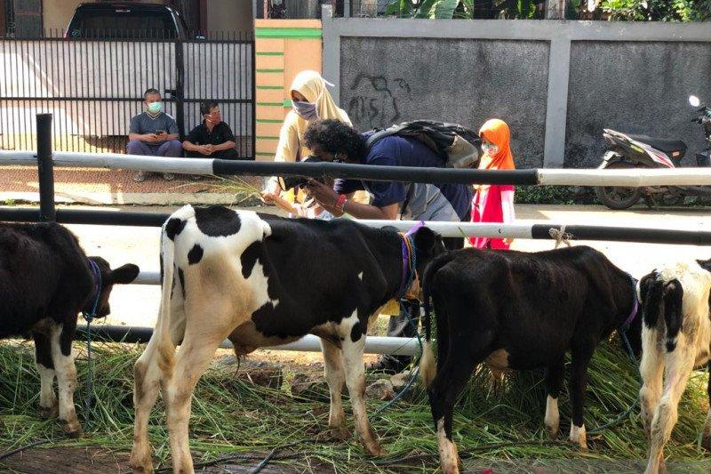 Cipayung miliki ekowisata edukasi sapi perah
