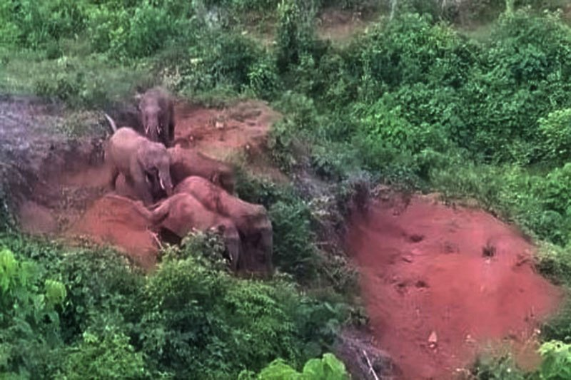 Menghalau gajah liar dari kawasan permukiman warga di Aceh
