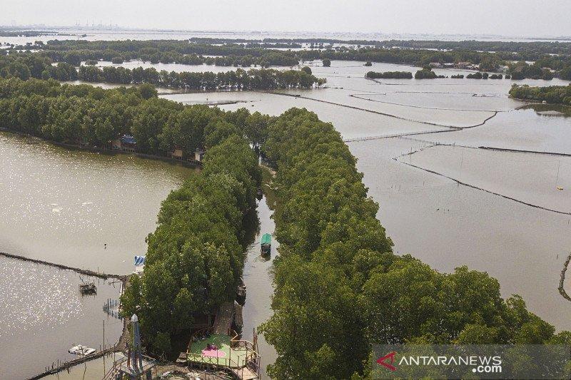 Wisata mangrove sungai Jingkem