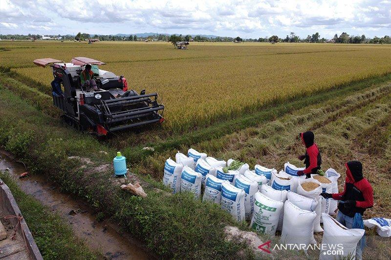 Kementan optimistis Indonesia surplus beras hingga Desember 2020