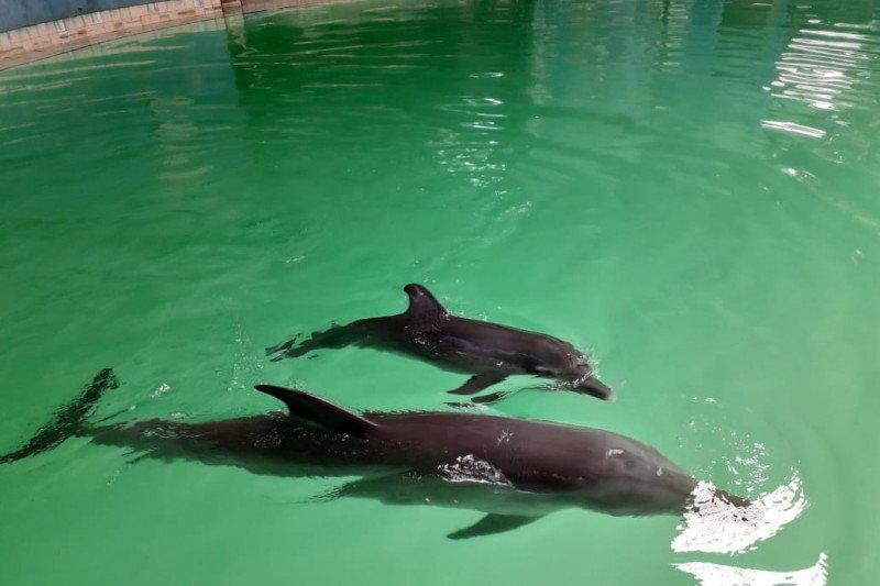 Menteri LHK beri nama bayi lumba-lumba lahir di Kendal