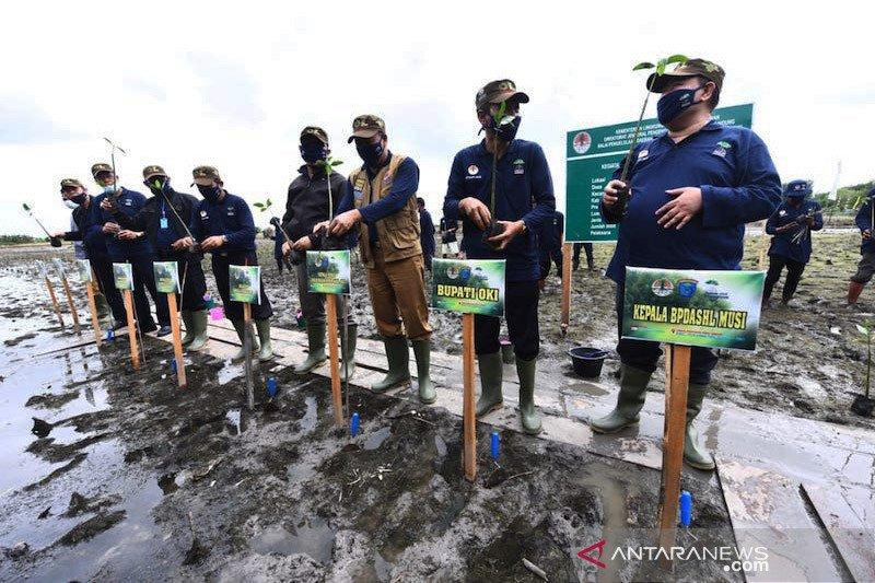 Program padat karya tanam mangrove dijalankan di Ogan Komering Ilir