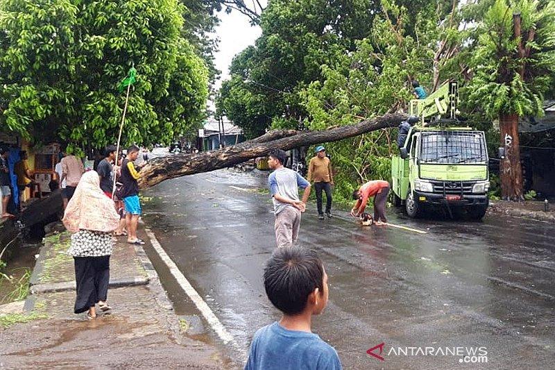 Sejumlah pohon di jalan raya tumbang akibat angin kencang