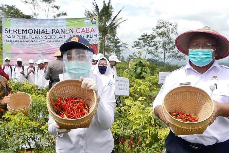 BMKG panen perdana cabai hasil SLI di Temanggung