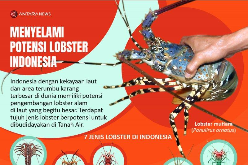 Menyelami potensi lobster Indonesia