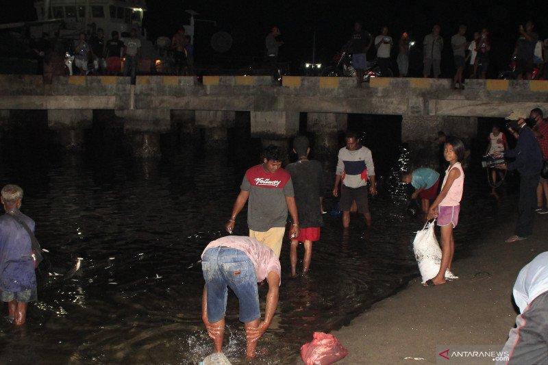 Ratusan warga ramai-ramai tangkap ikan hidup naik ke pesisir