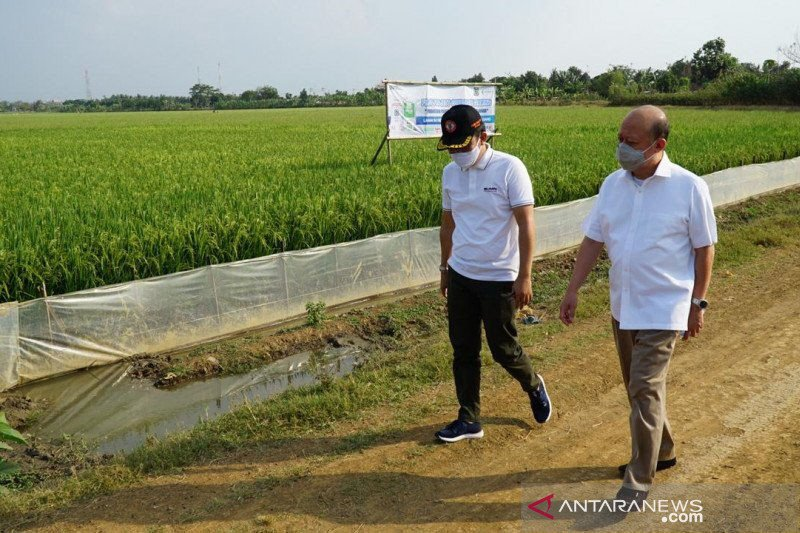 Pupuk Indonesia siap bangun pabrik petrokimia di wilayah Blok Masela