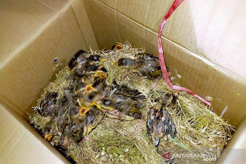 Pengiriman 715 burung berkicau tanpa dokumen berhasil digagalkan