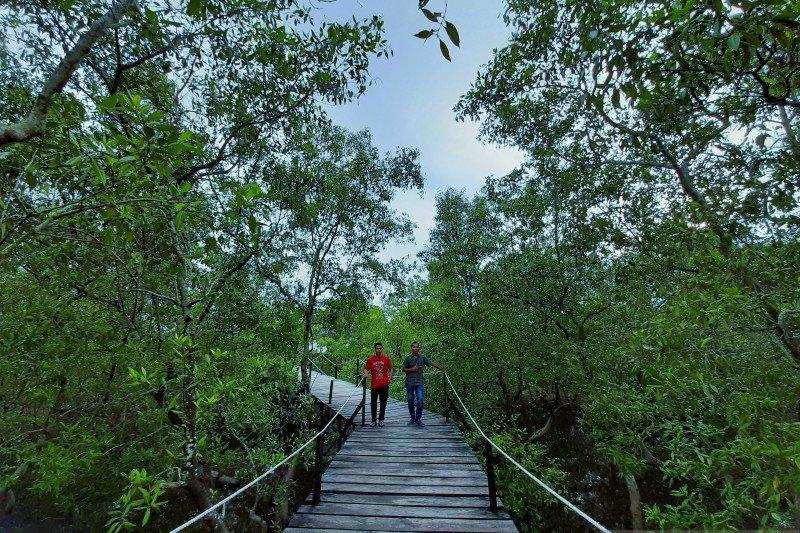 Riau masih jadi prioritas restorasi gambut dan mangrove