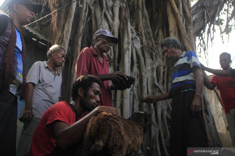 Puluhan suku di lereng Gunung Ili Lewotolok gelar ritual