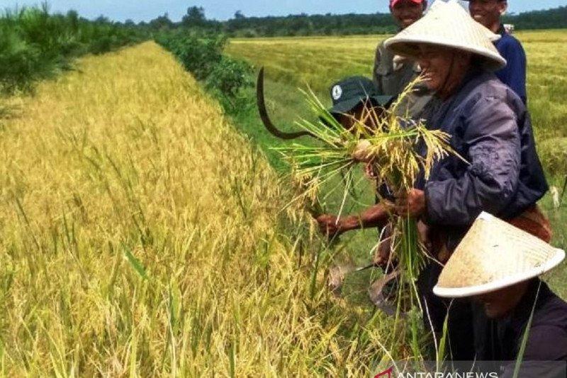 Persediaan beras di Sumsel cukup untuk tiga bulan ke depan