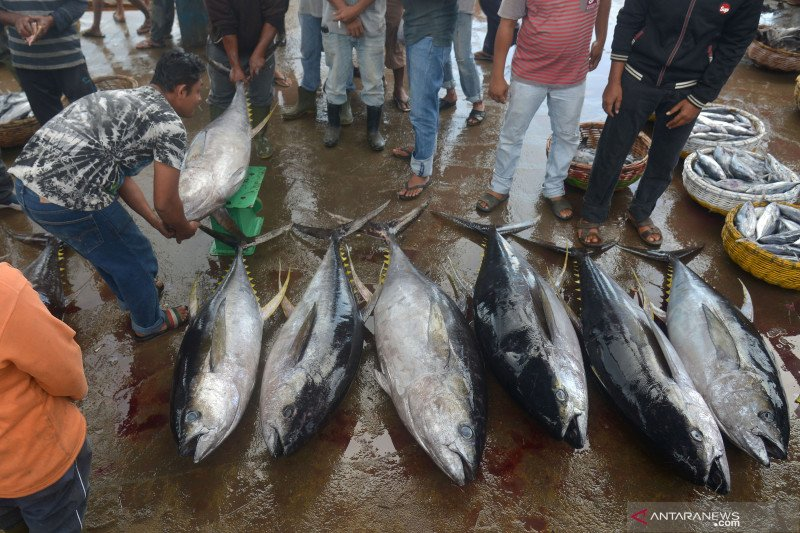 Pemerintah dorong hilirisasi produksi Hidrolisat Protein Ikan