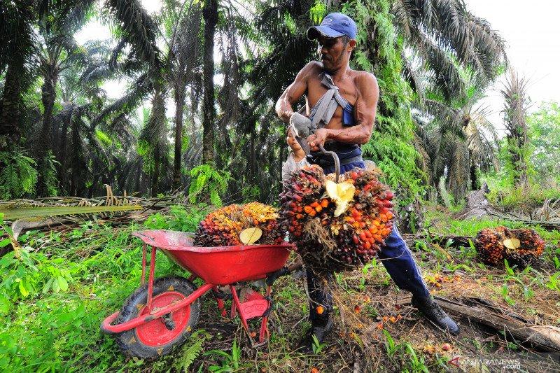 LIPI usulkan pembangunan kilang green fuel olah minyak sawit