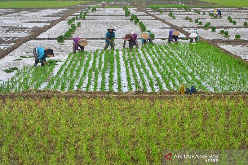 Nilai tukar petani naik