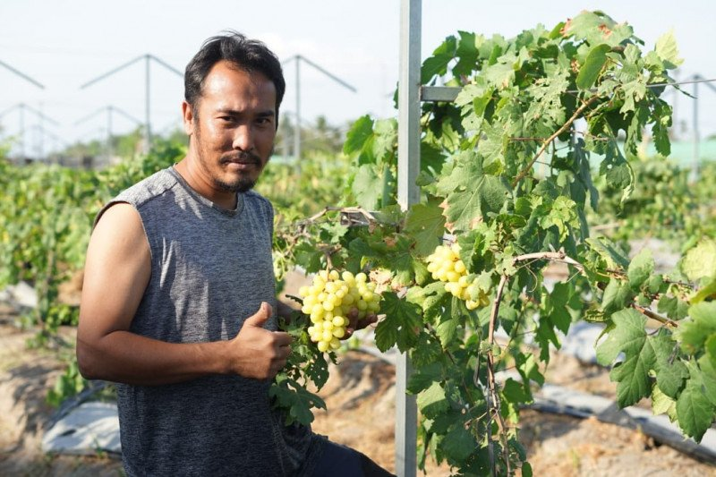 Sensasi wisata ke kebun anggur di Yogyakarta