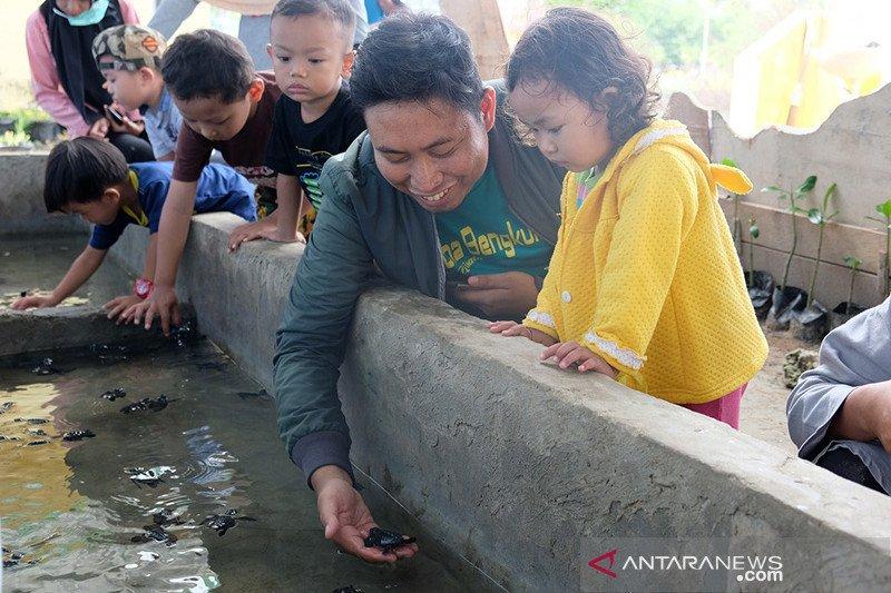 Lintas generasi sinergi kelola penangkaran penyu di Bengkulu (Bagian1)