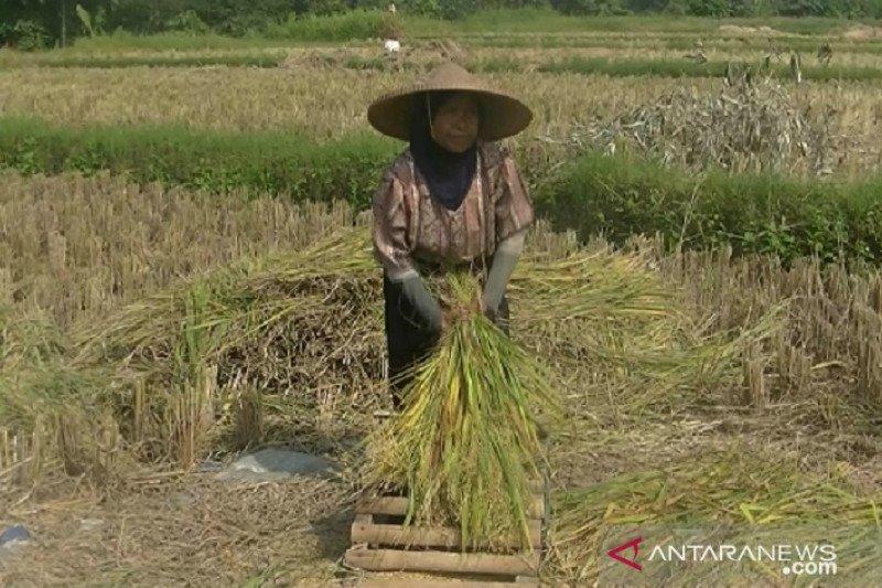 Petani Sukabumi kesulitan mendapatkan pupuk subsidi