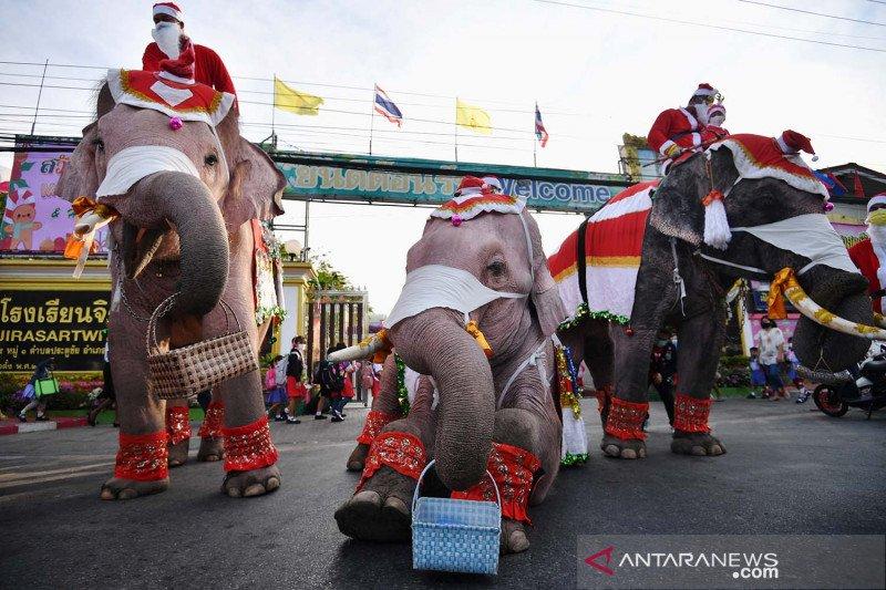 Gajah berkostum ala sinterklas bagikan masker di Thailand