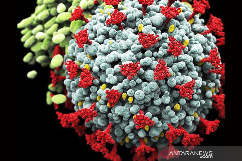 Ilmuwan: Ada bukti baru varian Afrika Selatan mengikat sel lebih mudah