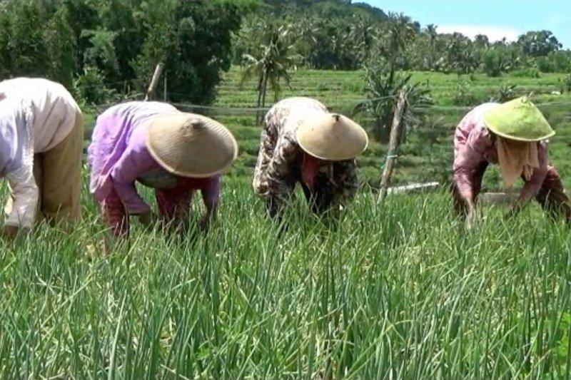 Agar petani di lahan kering Bantul bisa bercocok tanam sepanjang tahun