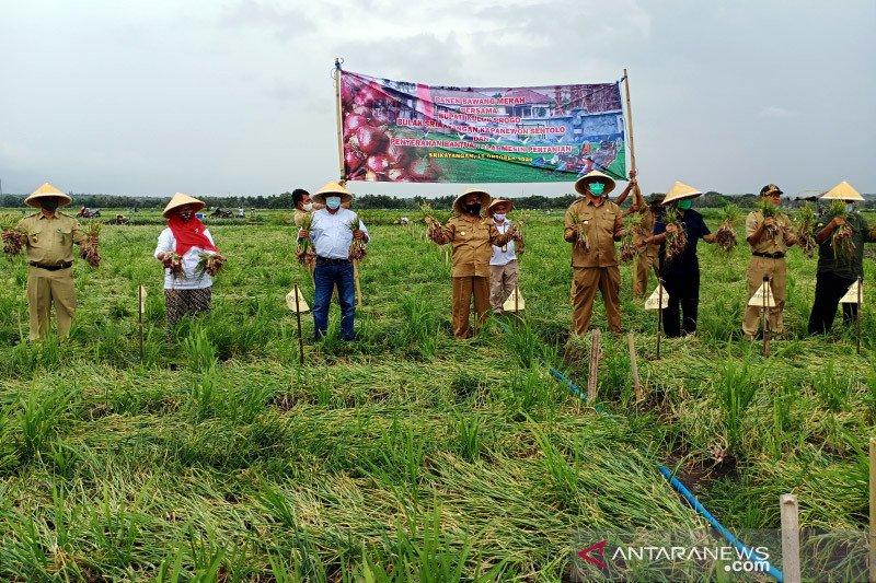Petani milenial garap Bulak Srikayangan jadi sentra bawang merah DIY