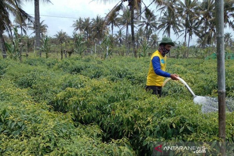 Sinergi petani dan pemerintah kelola hasil panen pada masa pandemi