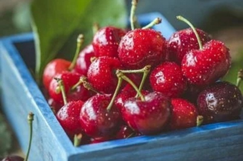 Manfaat ceri, melindungi dari diabetes hingga menurunkan kolesterol