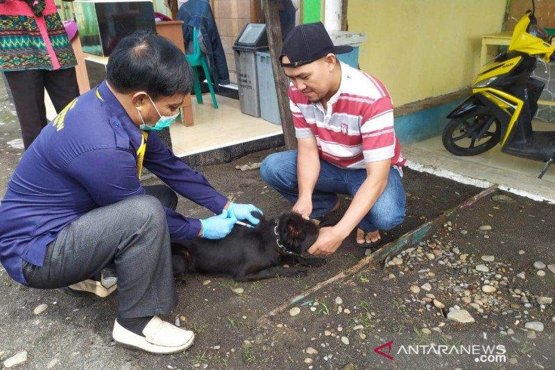 Ratusan warga di Rejang Lebong-Bengkulu digigit hewan penular rabies