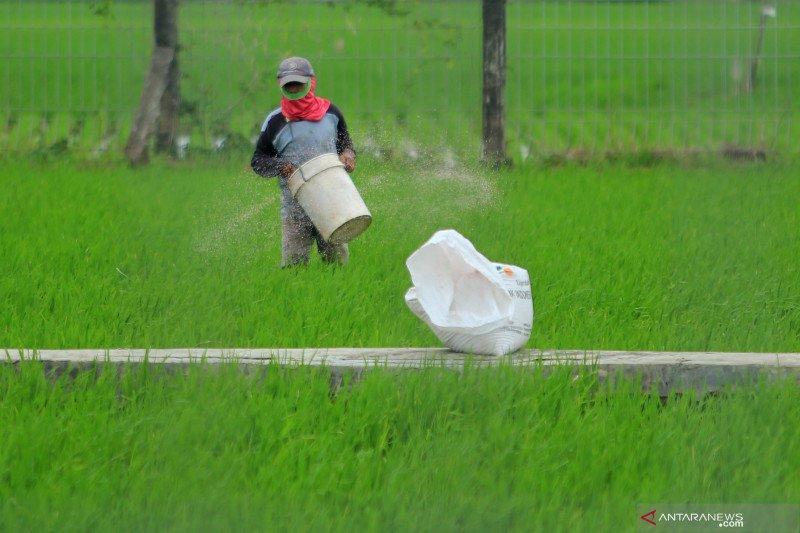 Pupuk terlambat, KTNA sebut SK Mentan baru terbit di 93 kabupaten