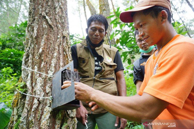 Warga deteksi satwa liar diduga harimau di lereng Gunung Wilis