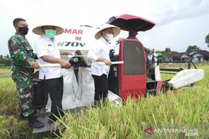 Luas areal tanaman padi 2020 di Banyuwangi lampaui target
