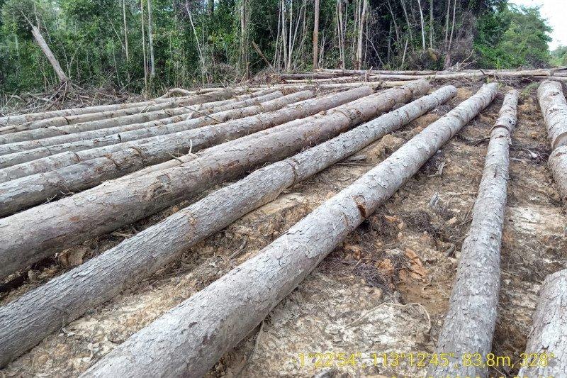 JPIK apresiasi Polri ungkap sindikat pembalakan kayu Kalimantan