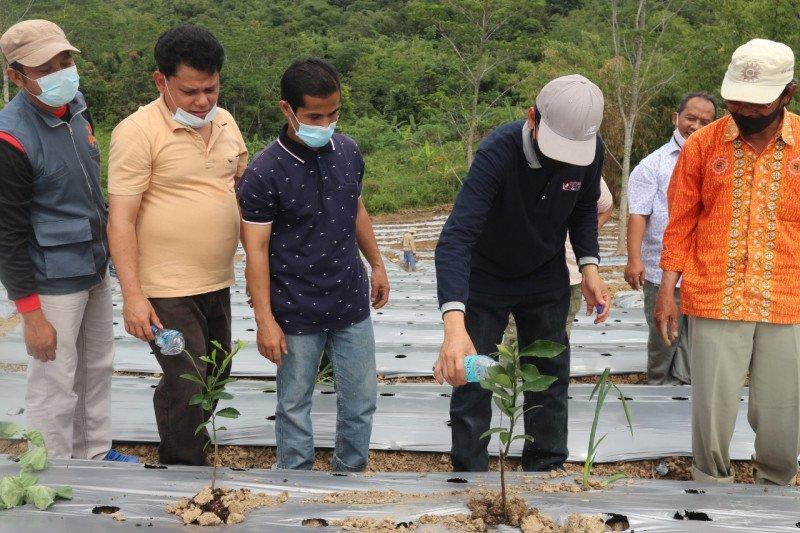 Tumbuhkan kedaulatan pangan, Muhammadiyah tanam sayuran di lahan wakaf