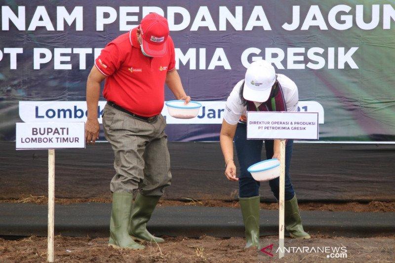 Tanam jagung di NTB, Petrokimia Gresik canangkan Program Agro Solution