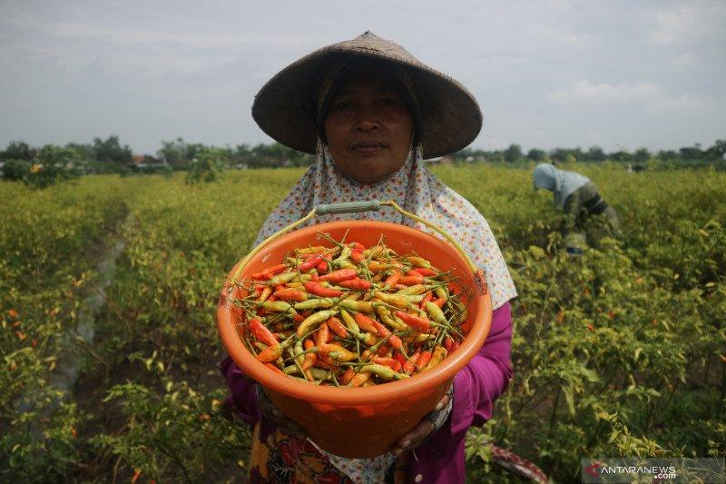 BPS: Cabai rawit dan bawang merah picu inflasi Maret 2021