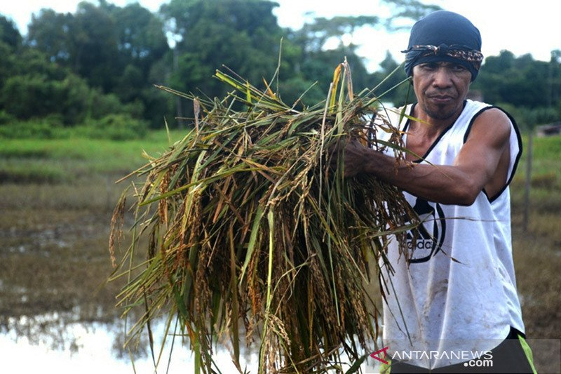 Asa entaskan banjir di Sembakung, satu sungai mengalir di dua negara