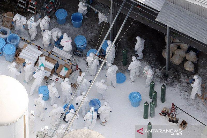 Swedia akan musnahkan 1,3 juta ayam usai adanya kasus flu burung