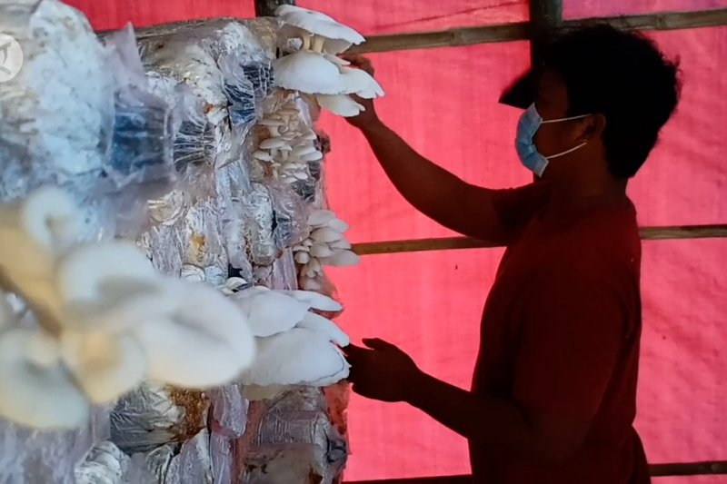 Pemuda di Cilegon berdayakan warga budi daya jamur tiram