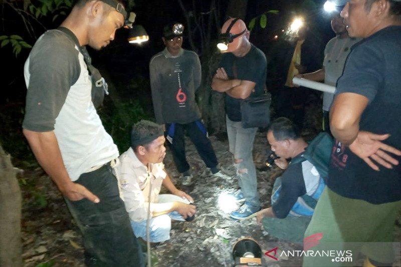 Tim BBKSDA Riau kesulitan giring dua gajah liar kembali ke kawanannya