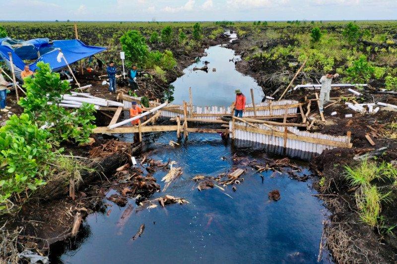 BRGM sebut enam strategi percepatan rehabilitasi mangrove
