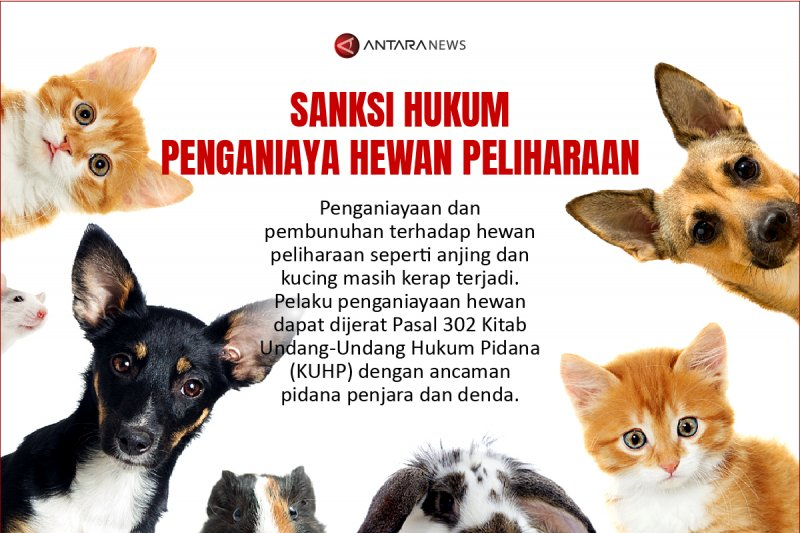 Sanksi hukum penganiaya hewan peliharaan