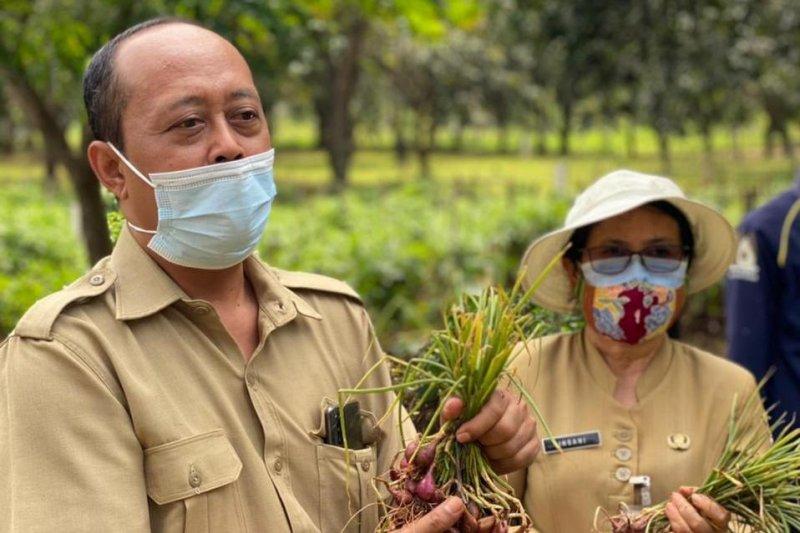 Sudin KPKP Jakarta Utara panen 60 kilogram bawang Brebes