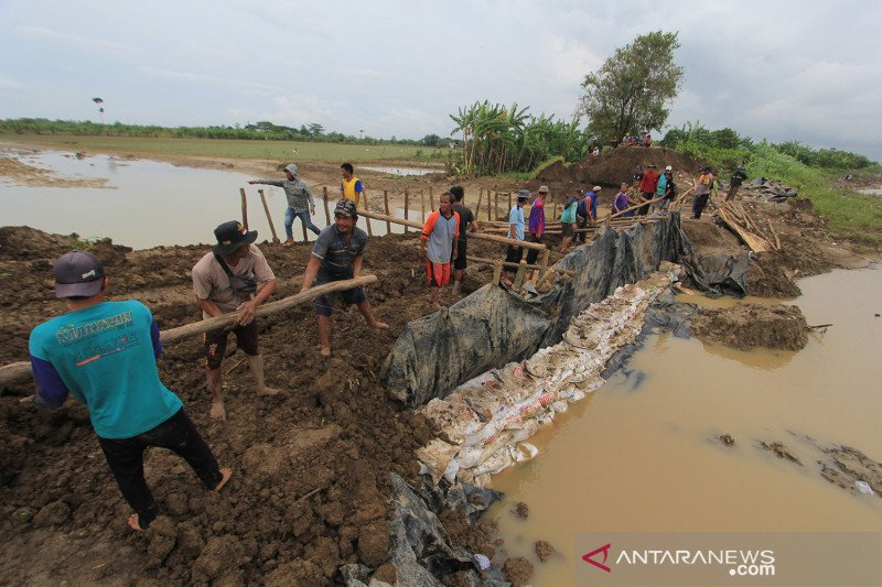 Perbaikan tanggul sungai yang jebol akibat banjir di Indramayu
