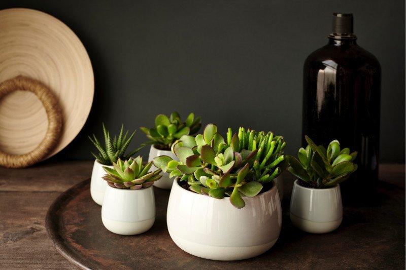 Lima kiat menata tanaman hias untuk segarkan suasana rumah