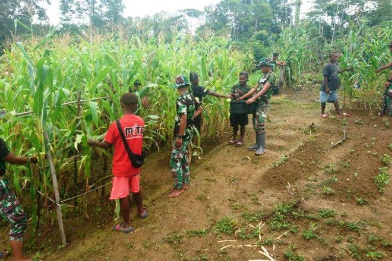 Satgas Yonif 312/KH bersama warga panen jagung di perbatasan RI-PNG