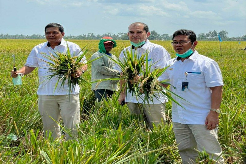 Bulog Sumut sudah beli 5.530 ton beras petani