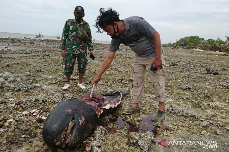 Seekor paus ditemukan dalam kondisi terpotong-potong