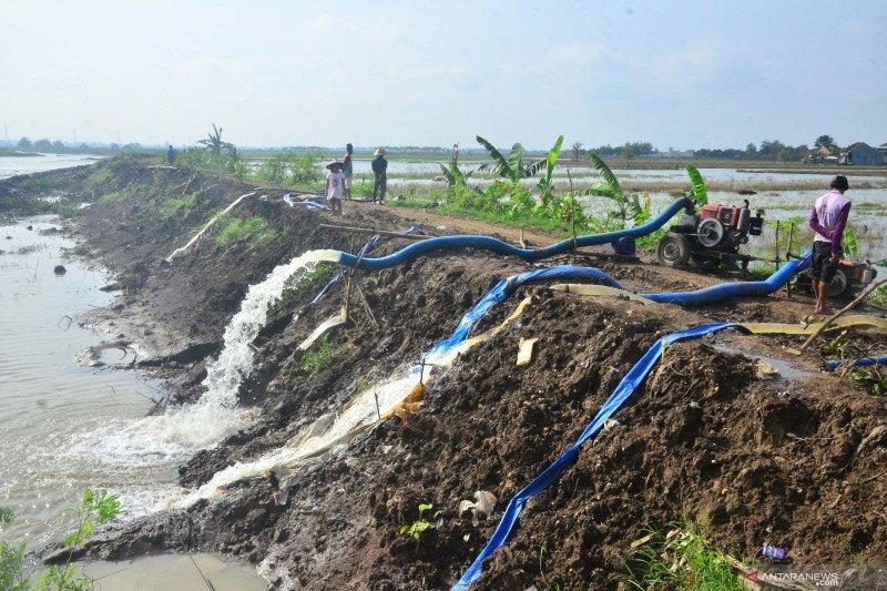 Penyedotan air yang menggenangi lahan pertanian