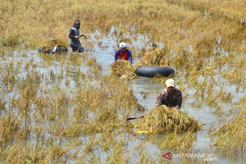 Kementan ungkap antisipasi gagal panen akibat bencana dan hujan deras